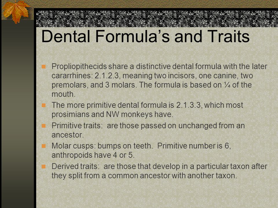 Dental Formula's and Traits