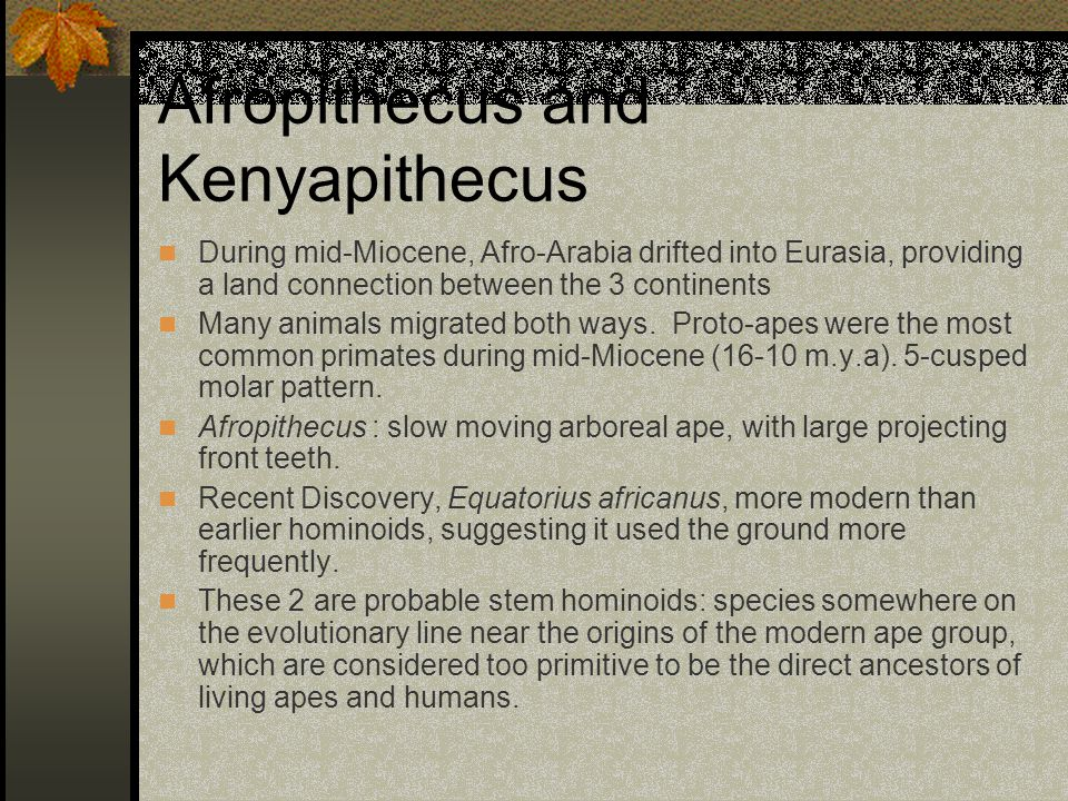 Afropithecus and Kenyapithecus