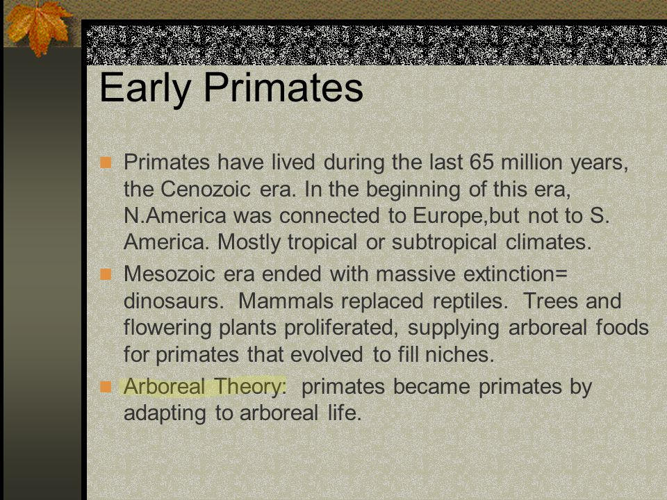 Early Primates