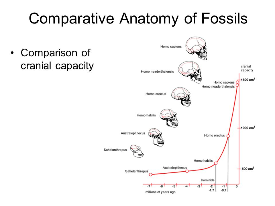 Comparative Anatomy of Fossils