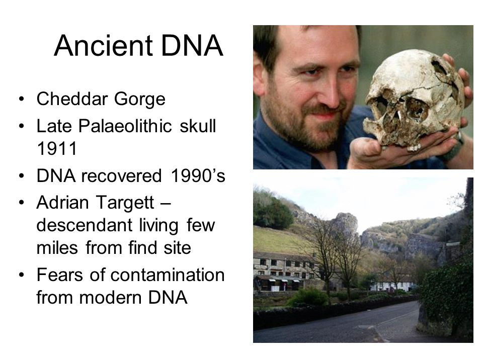 Ancient DNA Cheddar Gorge Late Palaeolithic skull 1911