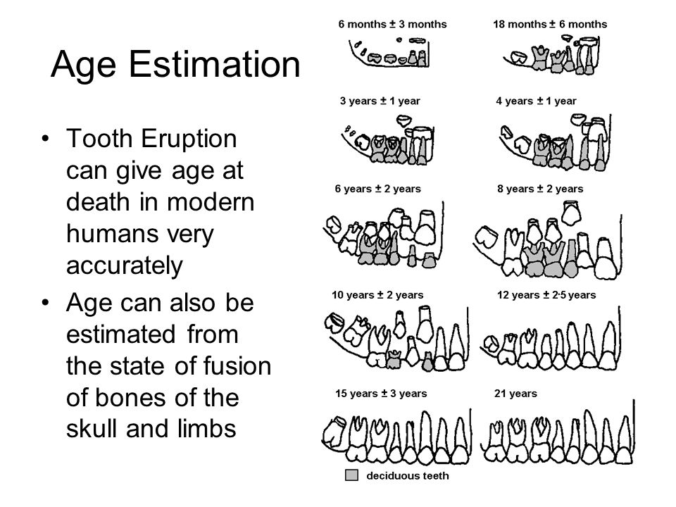 Age Estimation Tooth Eruption can give age at death in modern humans very accurately.