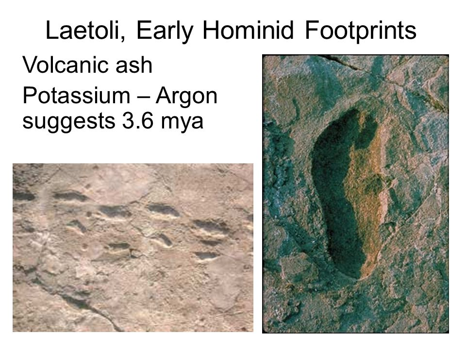 Laetoli, Early Hominid Footprints