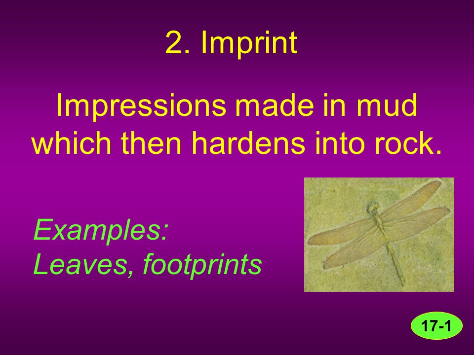 Impressions made in mud which then hardens into rock.