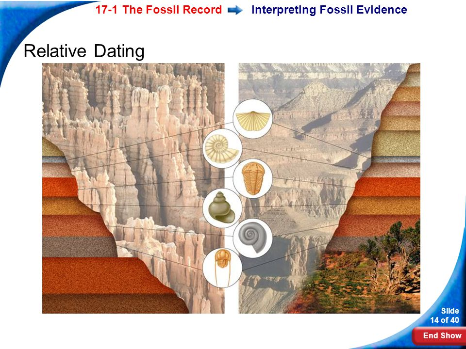 what information does relative dating provide to paleontologists