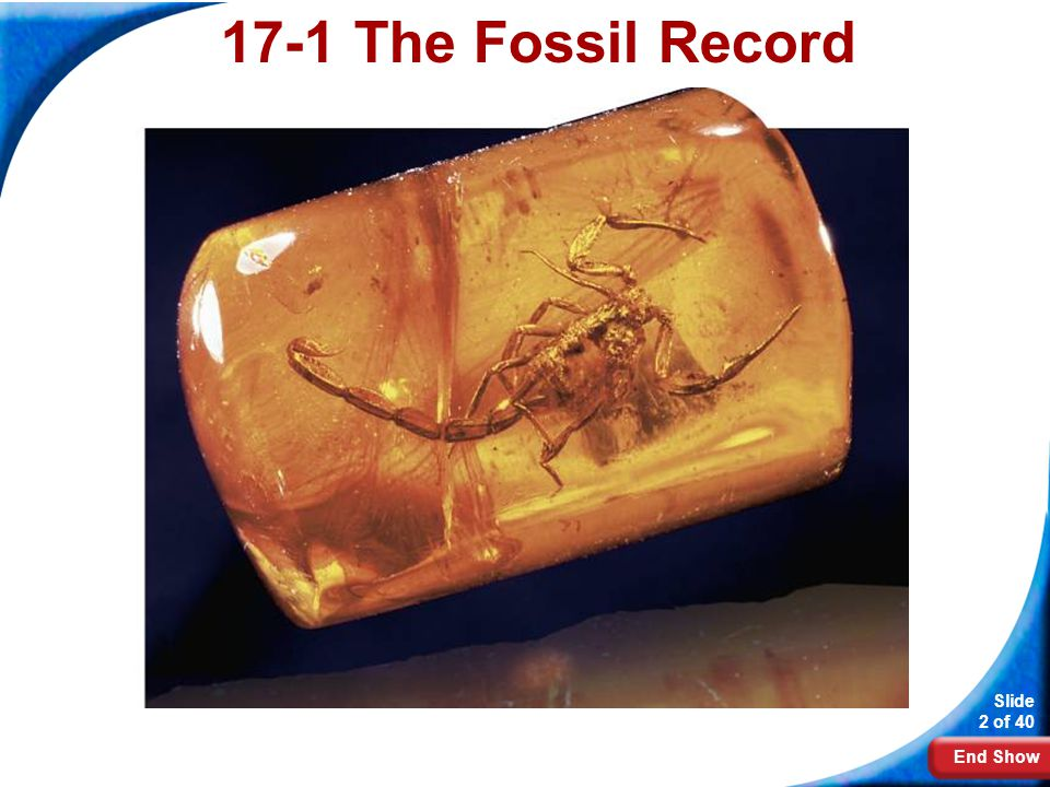 17-1 The Fossil Record Photo credit: Jackie Beckett/American Museum of Natural History