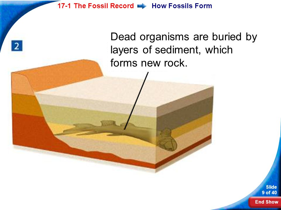 Dead organisms are buried by layers of sediment, which forms new rock.
