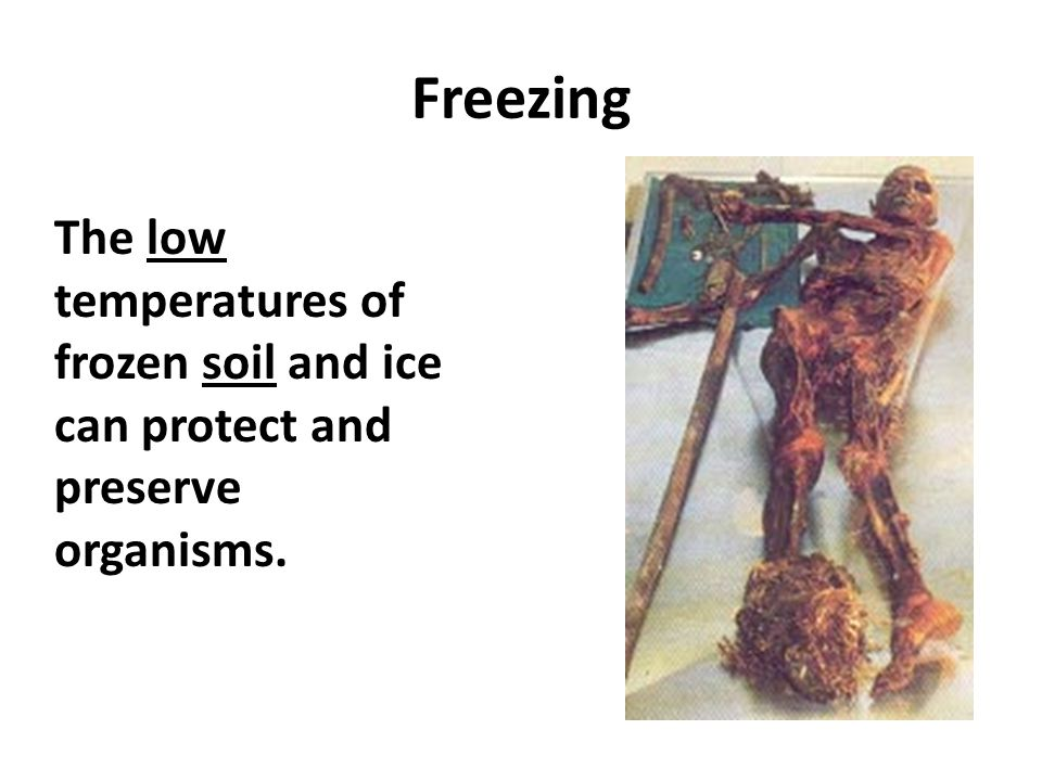 Freezing The low temperatures of frozen soil and ice can protect and preserve organisms.