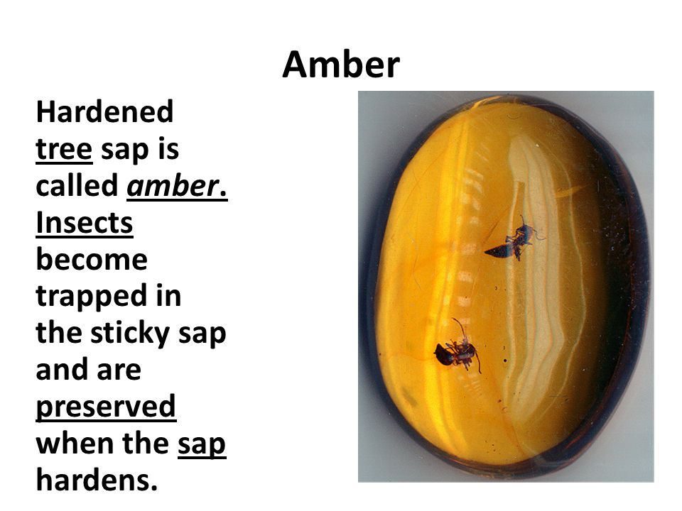 Amber Hardened tree sap is called amber.