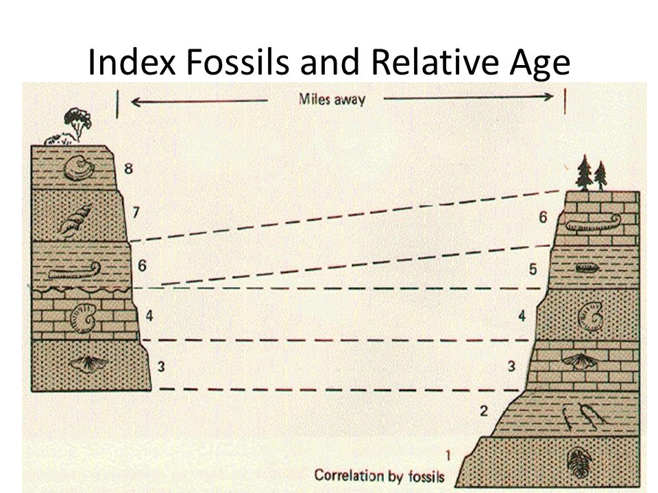 Index Fossils and Relative Age