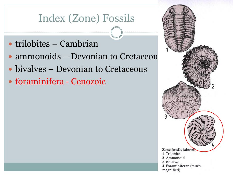 Index (Zone) Fossils trilobites – Cambrian