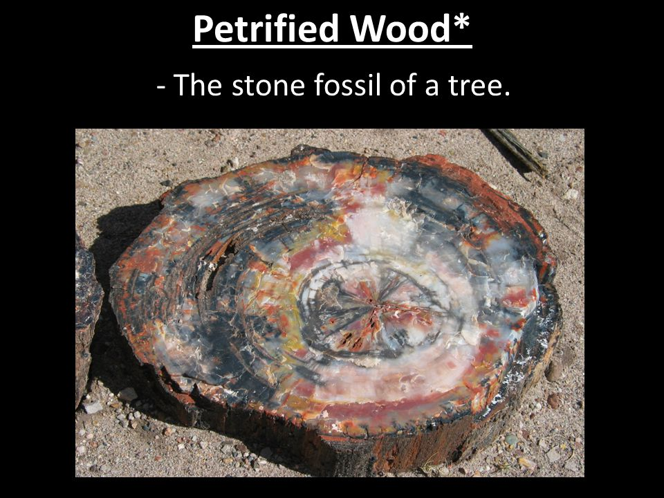 - The stone fossil of a tree.