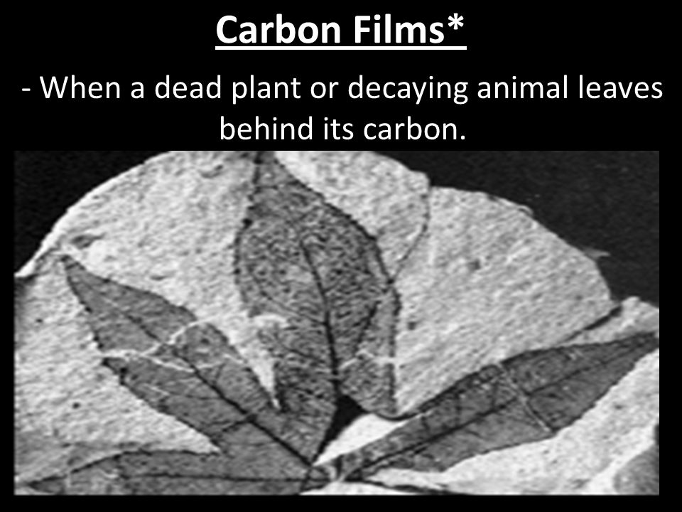 - When a dead plant or decaying animal leaves behind its carbon.