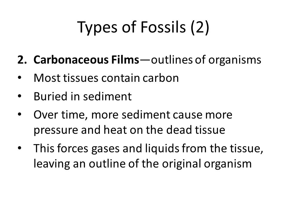Types of Fossils (2) Carbonaceous Films—outlines of organisms