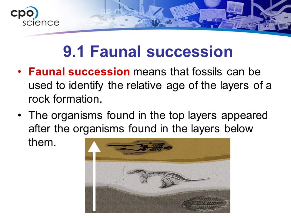 9.1 Faunal succession Faunal succession means that fossils can be used to identify the relative age of the layers of a rock formation.