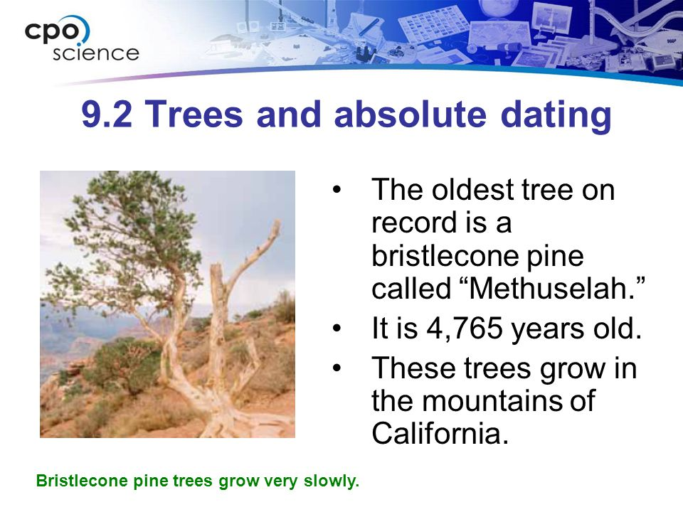9.2 Trees and absolute dating