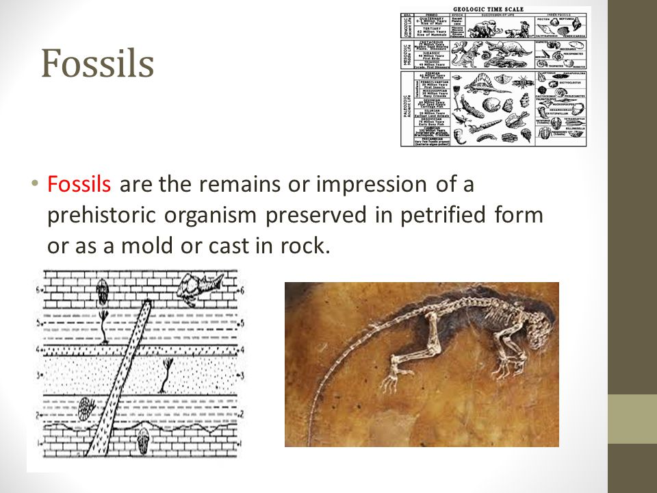 Fossils Fossils are the remains or impression of a prehistoric organism preserved in petrified form or as a mold or cast in rock.