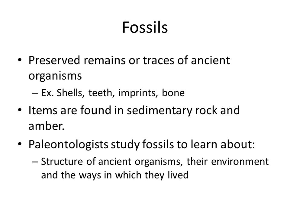 Fossils Preserved remains or traces of ancient organisms