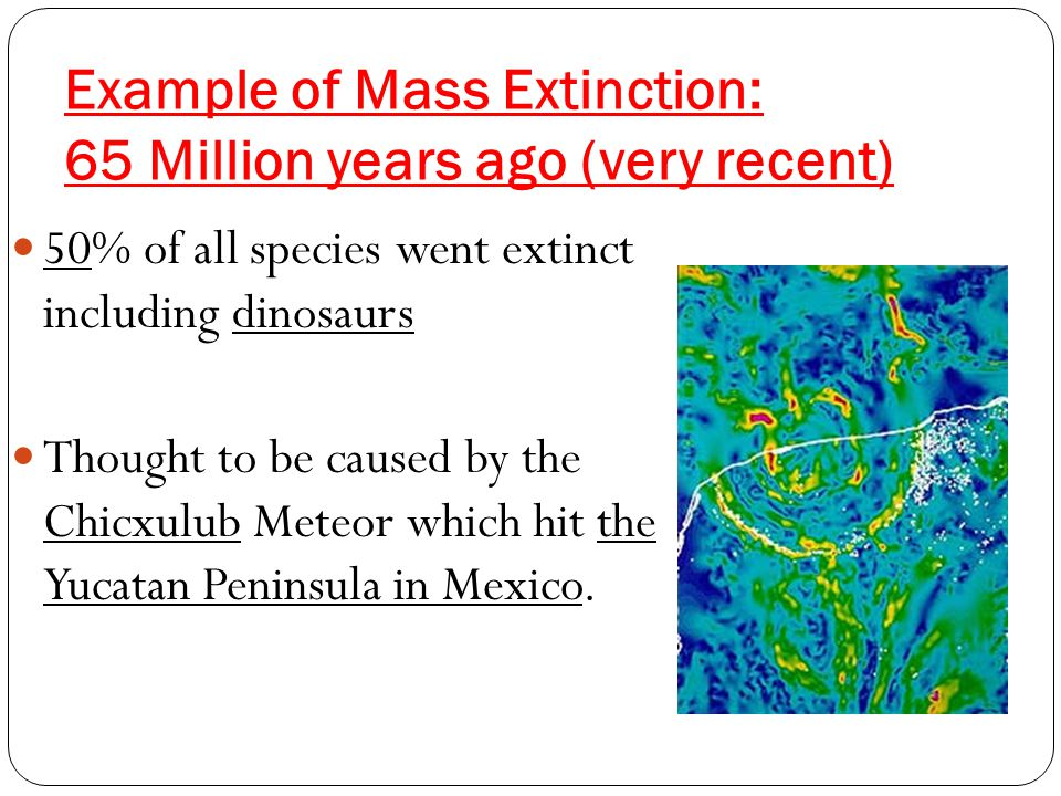 Example of Mass Extinction: 65 Million years ago (very recent)