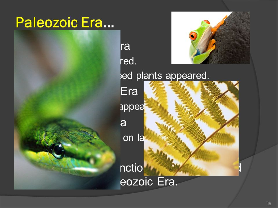 Paleozoic Era… Early Paleozoic Era Middle Paleozoic Era