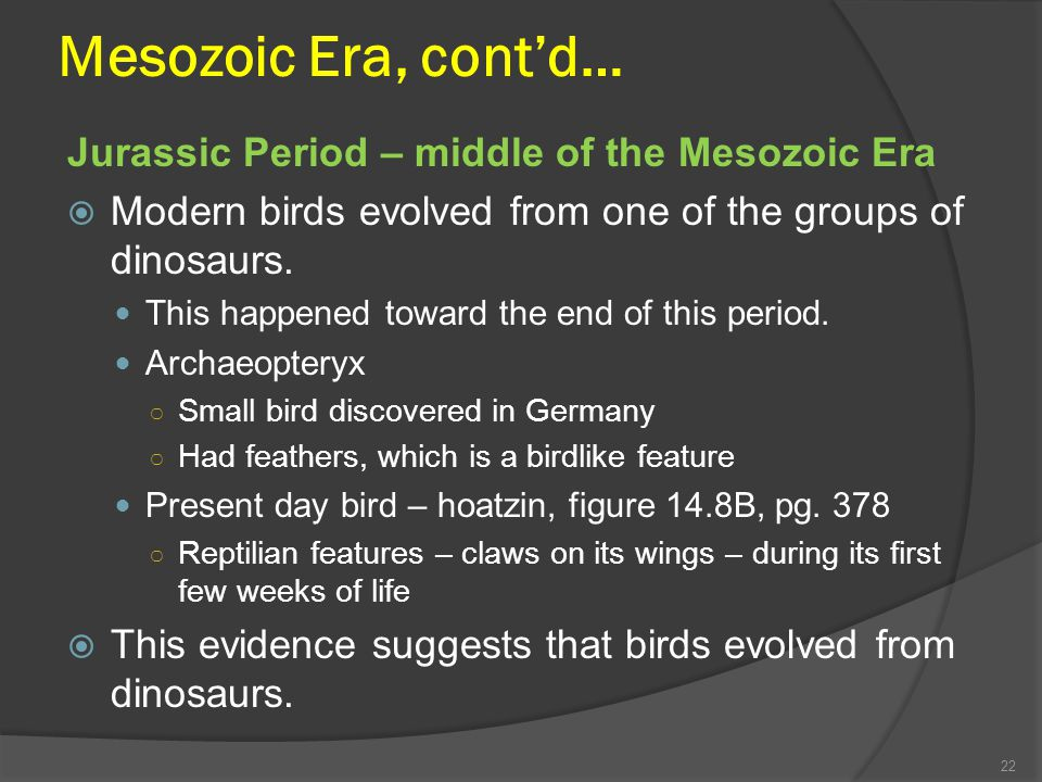 Mesozoic Era, cont'd… Jurassic Period – middle of the Mesozoic Era