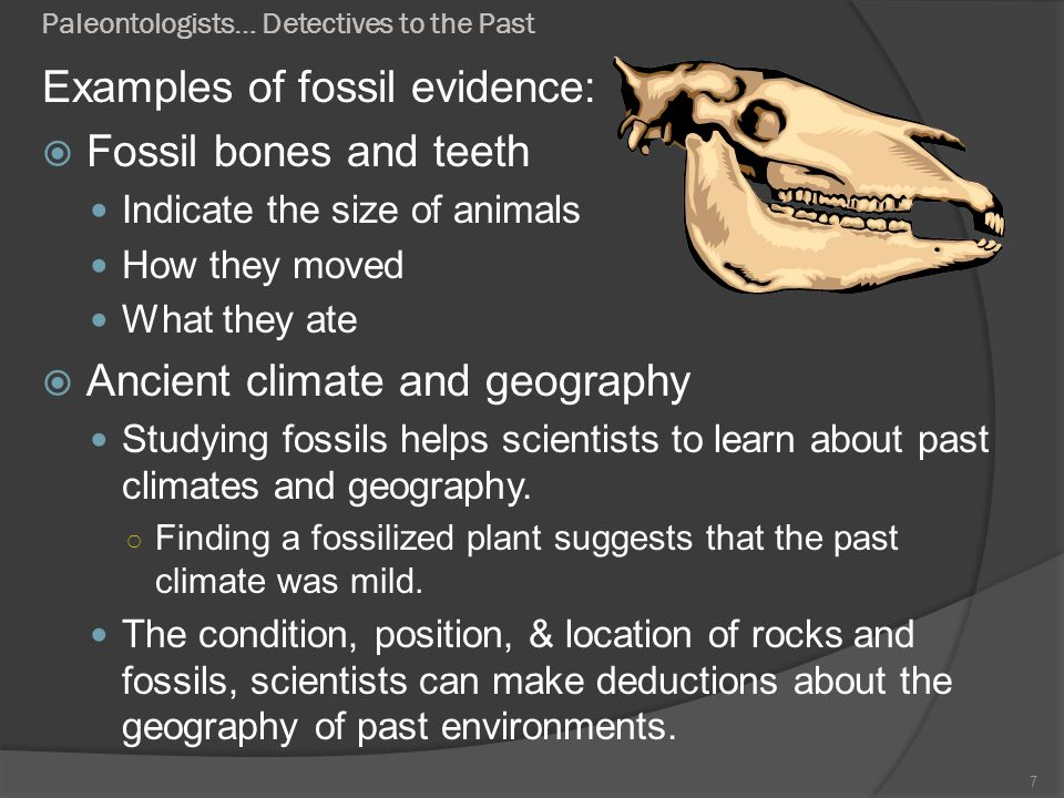 Paleontologists… Detectives to the Past