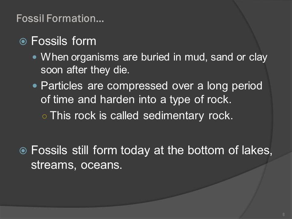 Fossils still form today at the bottom of lakes, streams, oceans.