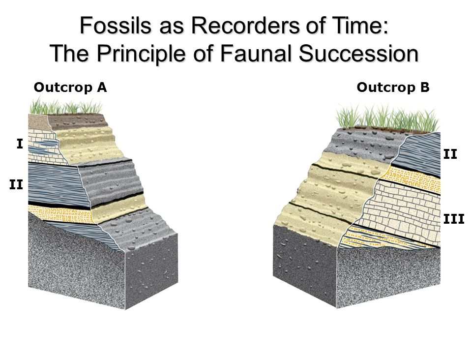 Fossils as Recorders of Time: The Principle of Faunal Succession