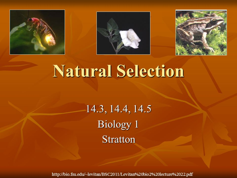Natural Selection 14.3, 14.4, 14.5 Biology 1 Stratton
