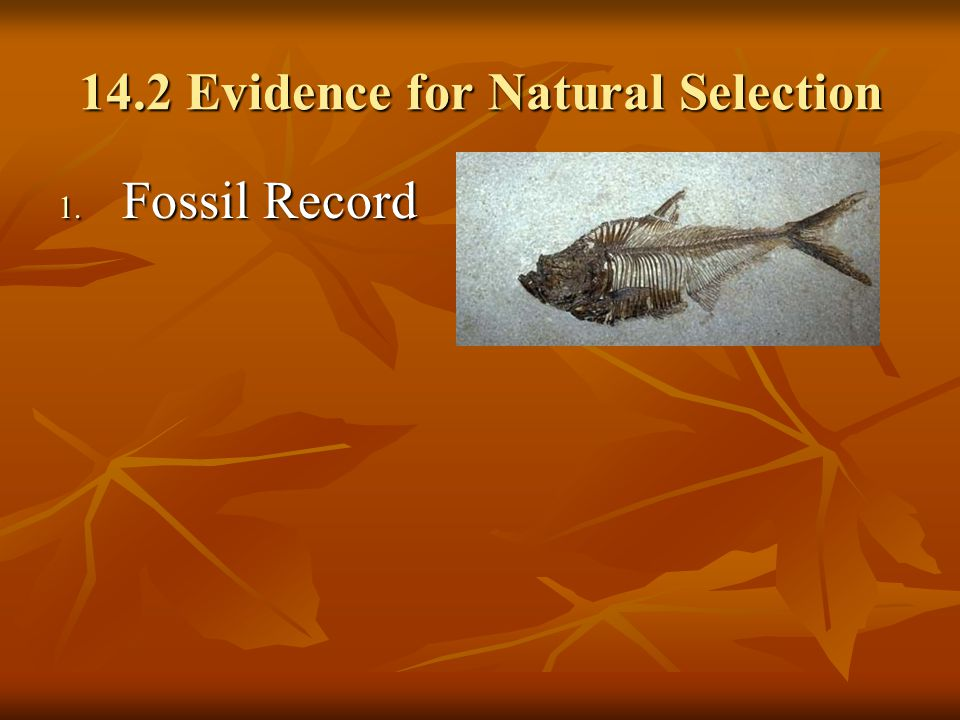 14.2 Evidence for Natural Selection