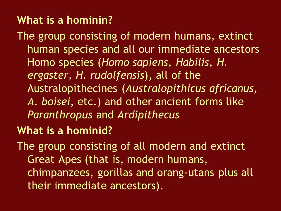 What is a hominin