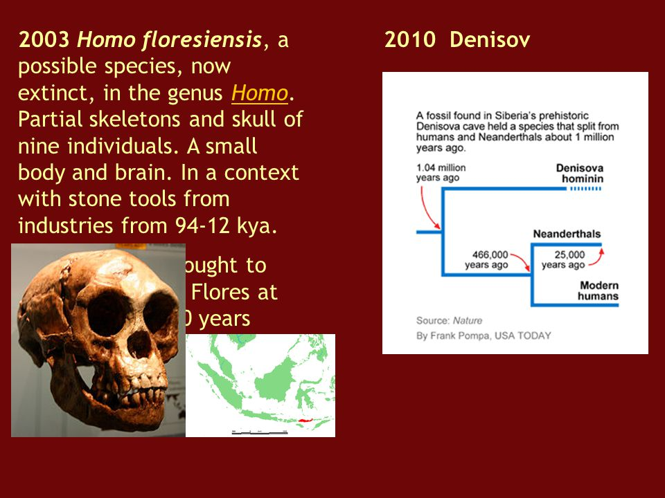 2003 Homo floresiensis, a possible species, now extinct, in the genus Homo. Partial skeletons and skull of nine individuals. A small body and brain. In a context with stone tools from industries from 94-12 kya.
