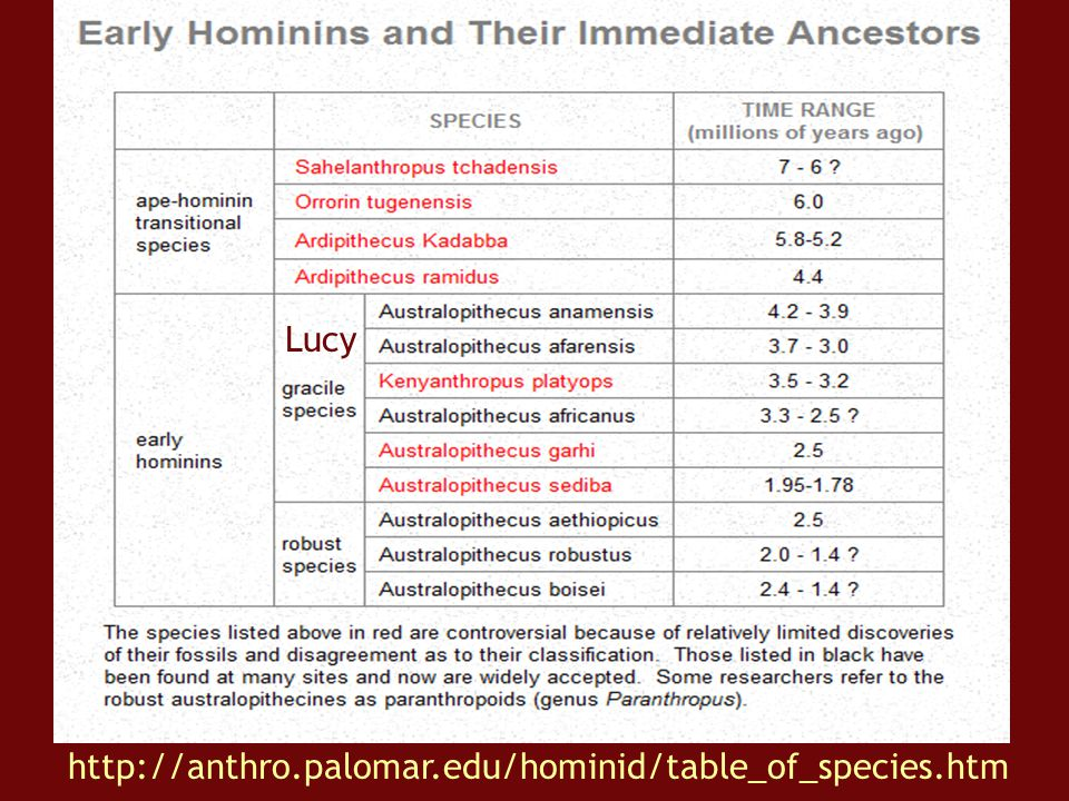 Lucy http://anthro.palomar.edu/hominid/table_of_species.htm