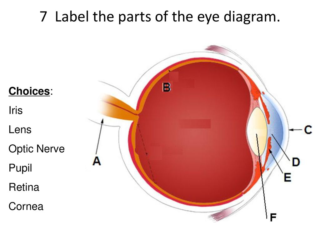 7 label the parts of the eye diagram