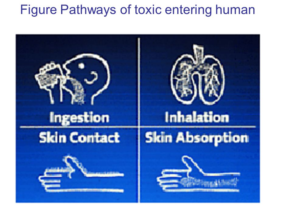Figure Pathways of toxic entering human