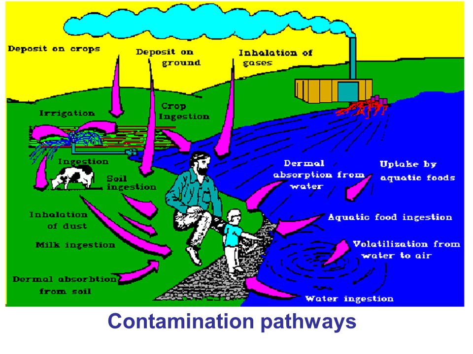 Contamination pathways