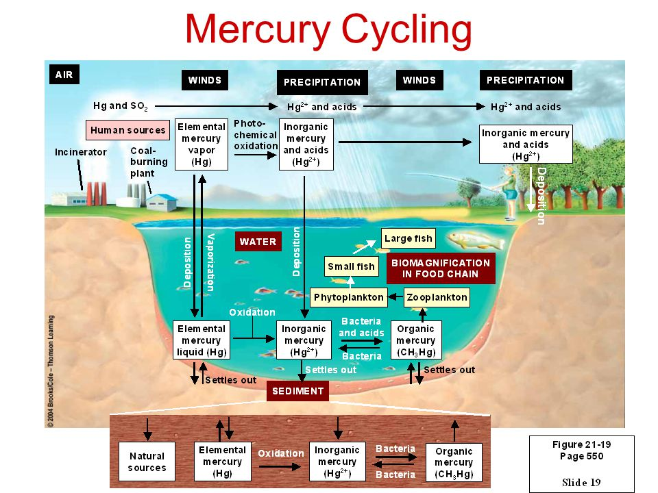 Mercury Cycling
