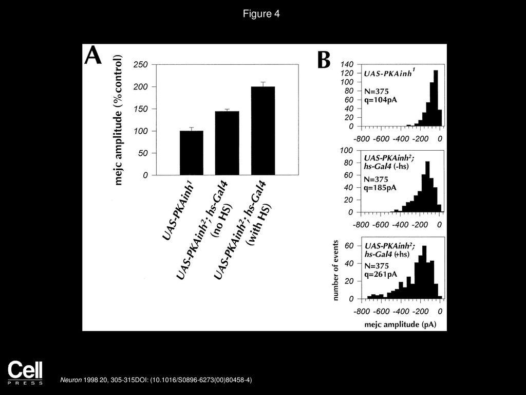 Postsynaptic PKA Controls Quantal Size and Reveals a Retrograde