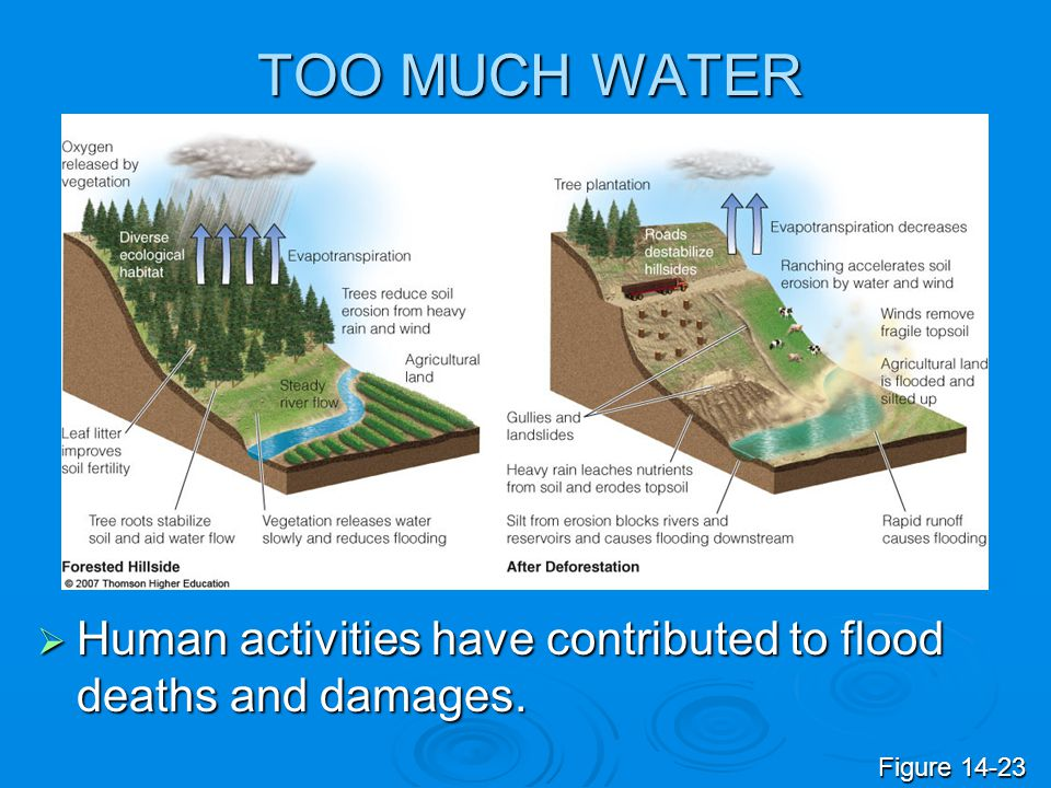 TOO MUCH WATER Human activities have contributed to flood deaths and damages. Figure 14-23