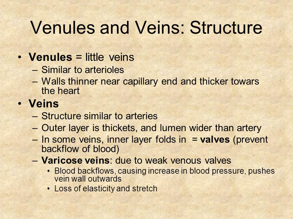 Venules and Veins: Structure