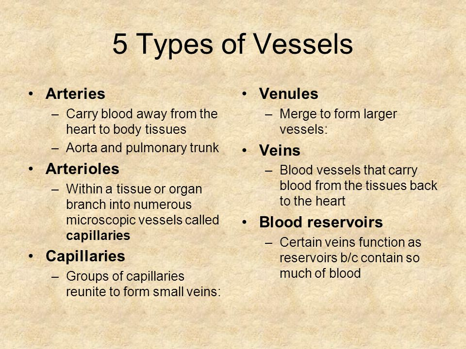 5 Types of Vessels Arteries Arterioles Capillaries Venules Veins