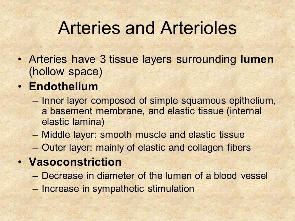 Arteries and Arterioles