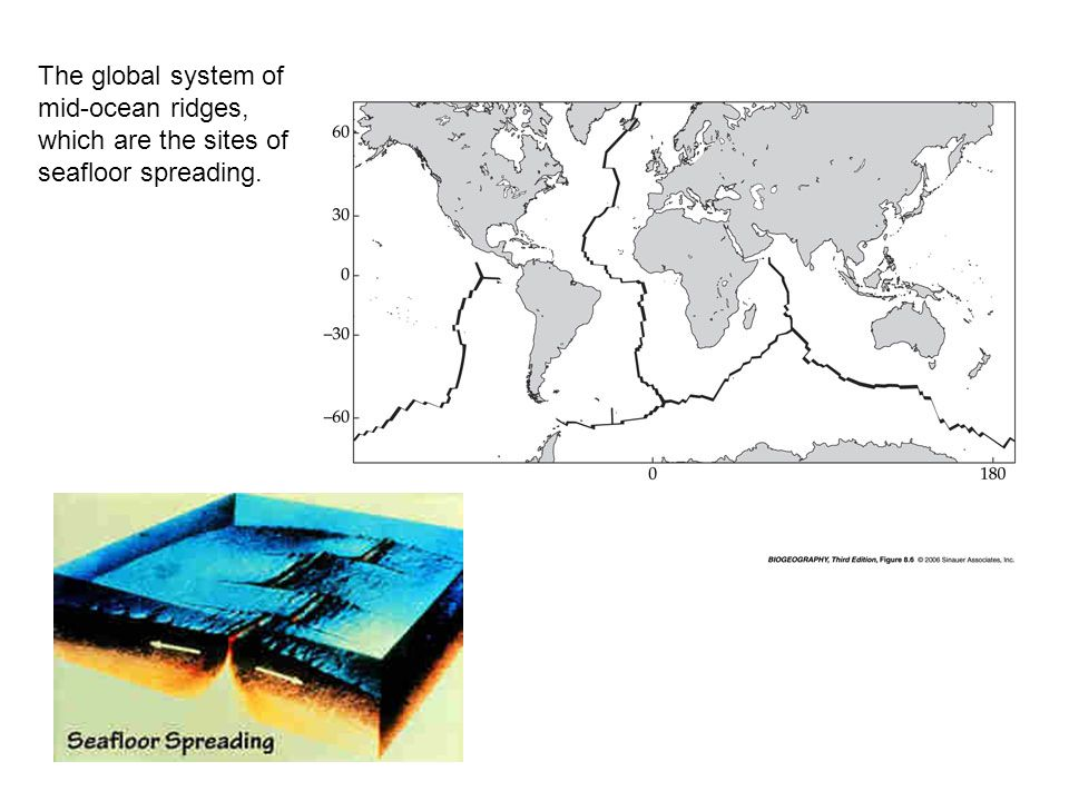 The global system of mid-ocean ridges, which are the sites of seafloor spreading.