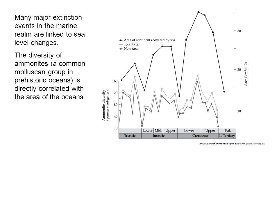 Many major extinction events in the marine realm are linked to sea level changes.