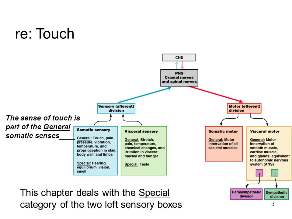 re: Touch The sense of touch is part of the General somatic senses____.
