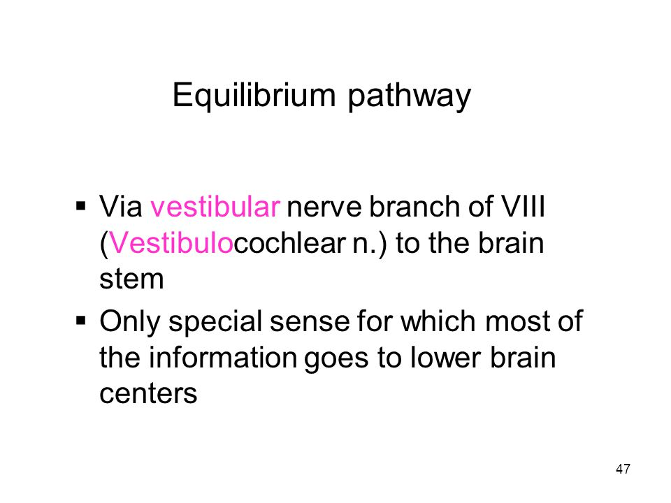 Equilibrium pathway Via vestibular nerve branch of VIII (Vestibulocochlear n.) to the brain stem.