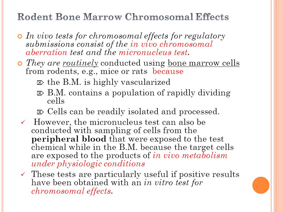 Rodent Bone Marrow Chromosomal Effects