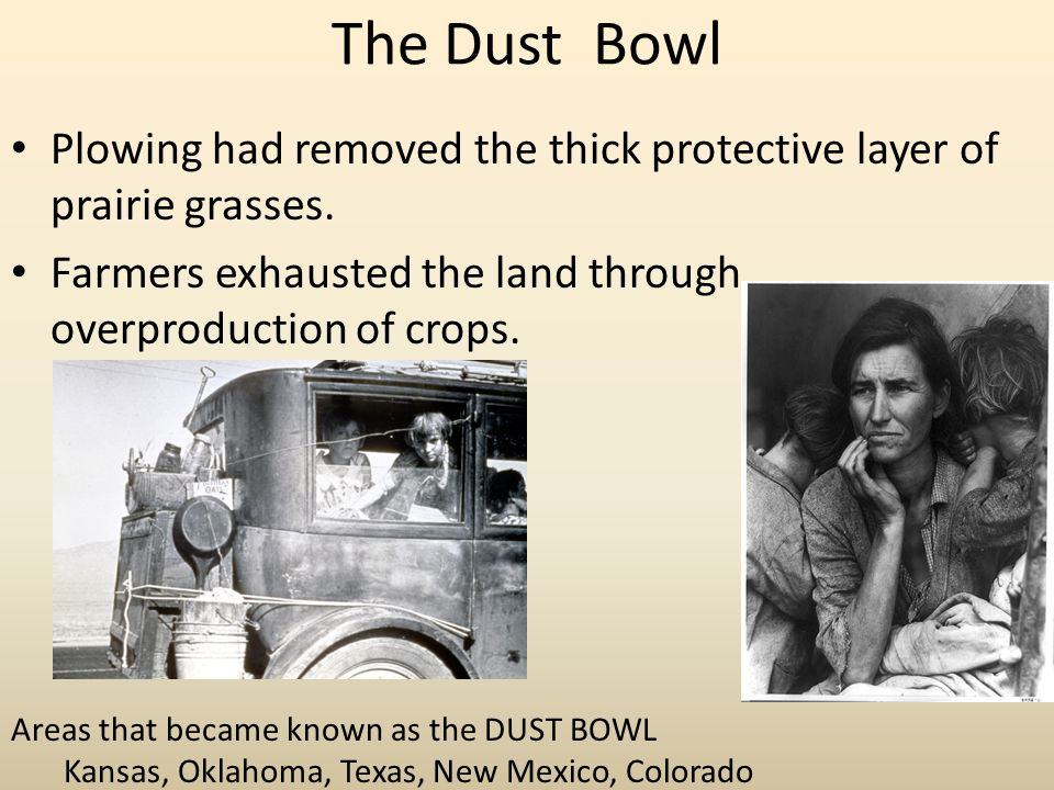 The Dust Bowl Plowing had removed the thick protective layer of prairie grasses. Farmers exhausted the land through overproduction of crops.