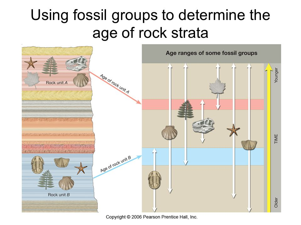 Using fossil groups to determine the age of rock strata