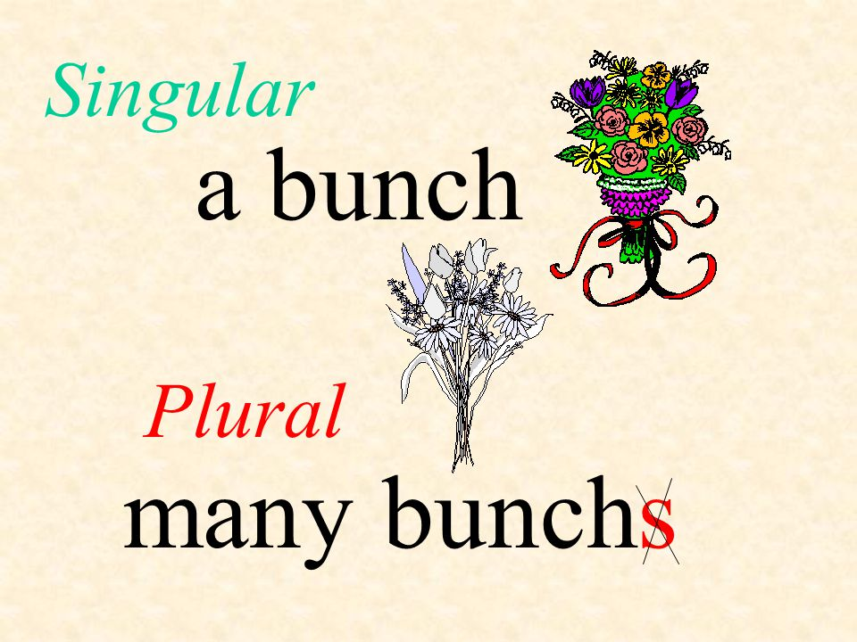 Singular a bunch Plural many bunch s